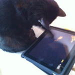 "Shiva und die App ""Game for Cats"""