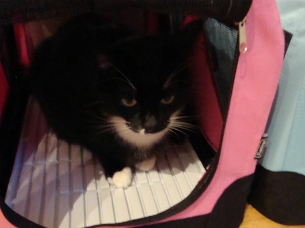 Katzen-Transportbox