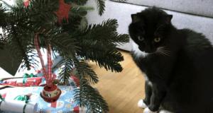 katze-und-weihnachtsbaum