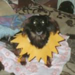 Dackel Nessi - ein wahrer Sonnenschein