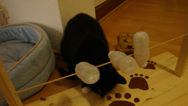 Katzenspielzeug Zum Selber Basteln ~ Die neuesten ...