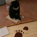 Mogli hilft beim Pfötchen malen.