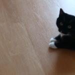 Igelball für Katzen 5
