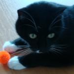 Igelball für Katzen 6