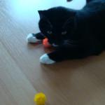 Igelball für Katzen 7