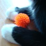 Igelball für Katzen 8