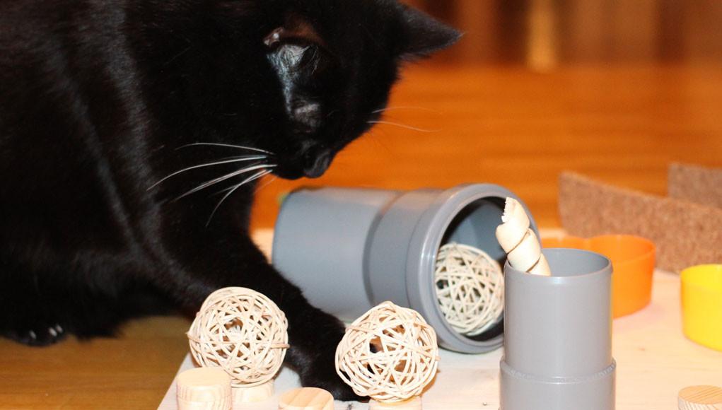 katzenspielzeug selber machen intelligenzspiel f r katzen. Black Bedroom Furniture Sets. Home Design Ideas