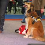 Erste Hilfe Praktikant Haustiermesse Hamburg