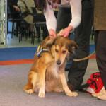Erste Hilfe für Hunde Haustiermesse Hamburg