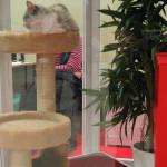 Rassekatze Haustiermesse Hamburg