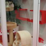 Royal Canin Rassekatzenaustellung Haustiermesse Hamburg