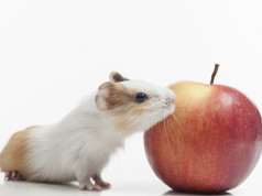 hamster frischfutter