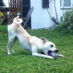 Niedlicher Hund mit Ball