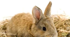 kaninchen durchfall