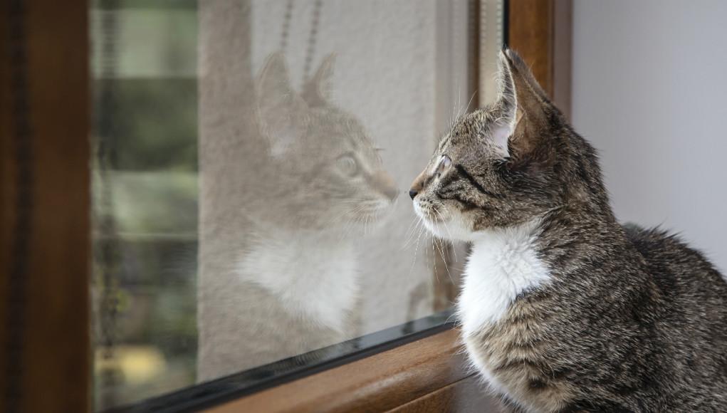 kippfenstersyndrom katze