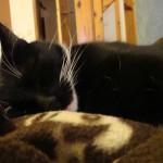 Schlafende Katzen 6