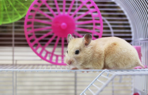 laufrad hamsterrad