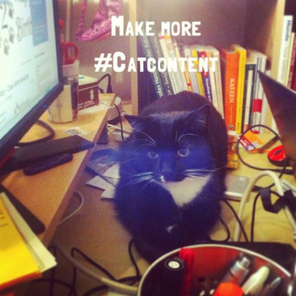 make more catcontent