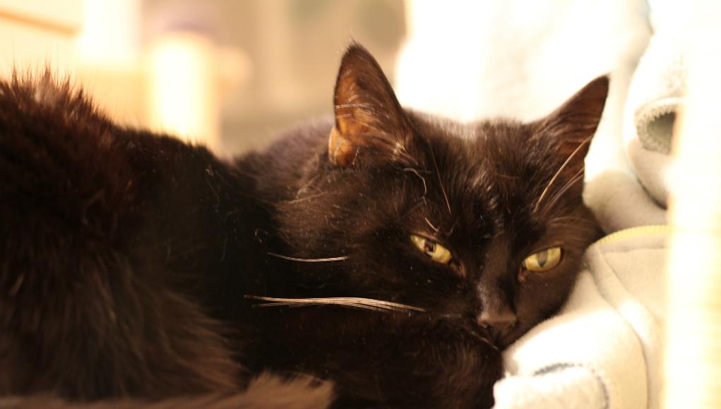 schuppen bei katzen ursachen und behandlung. Black Bedroom Furniture Sets. Home Design Ideas