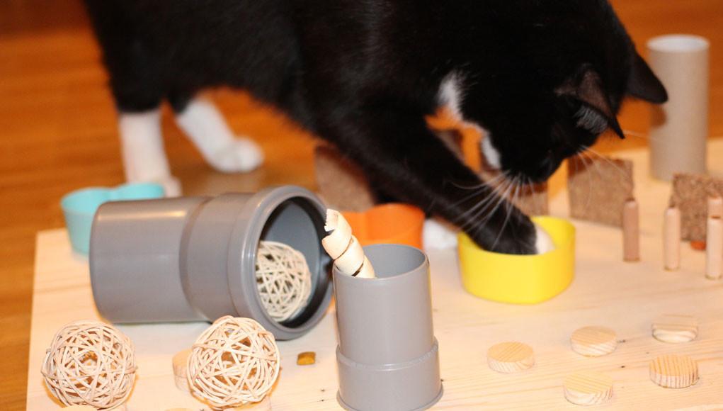 Fummelbrett Für Katzen Revvetde