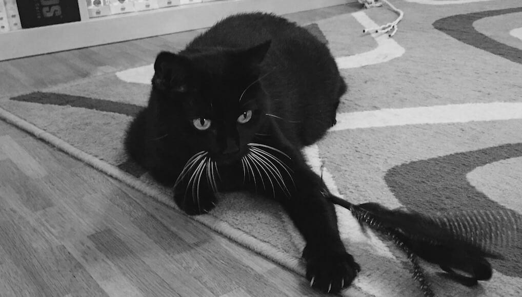 Schwarze Katze Sxe vidoe hd