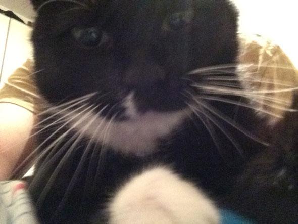 cat-snap-selfie1