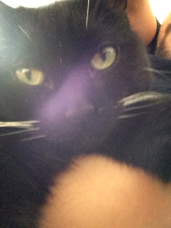 cat-snap-selfie2