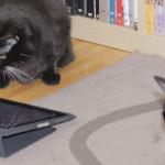 Shiva und Mogli: Wer darf ans iPad?
