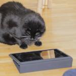 Shiva und die iPad-App