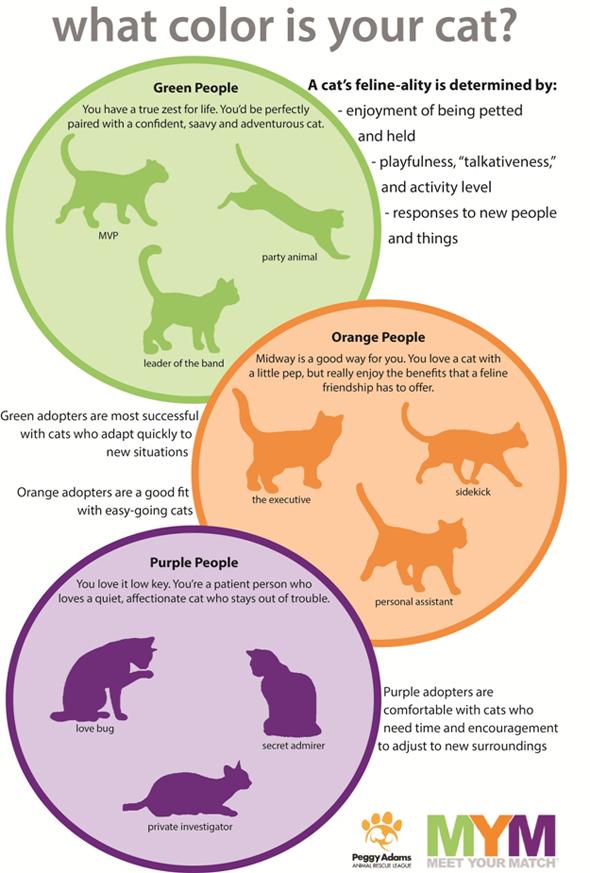Feline-Ality People Poster