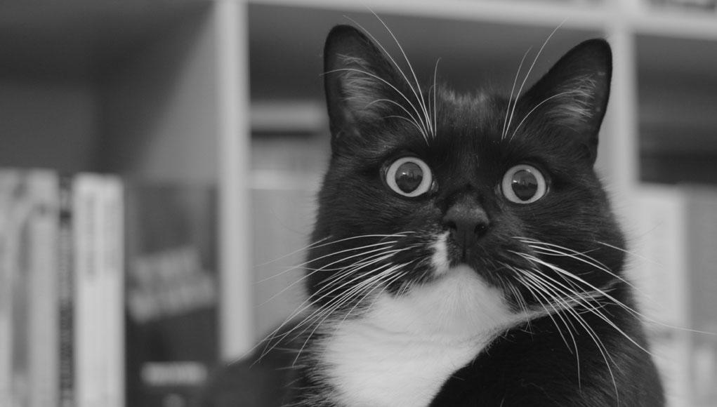 warum sind nachts alle katzen grau. Black Bedroom Furniture Sets. Home Design Ideas