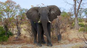 elephant-mario-michlisch