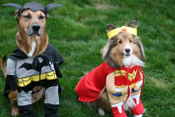 super-hunde