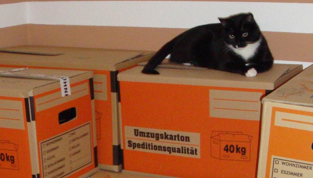 sieben tipps f r den umzug mit katzen. Black Bedroom Furniture Sets. Home Design Ideas