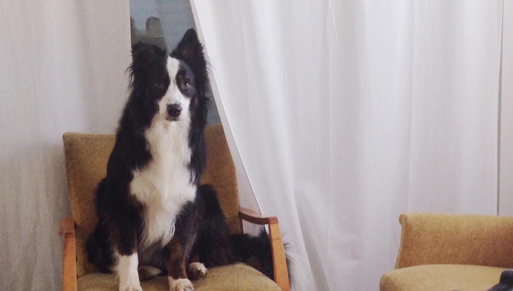 hunde und menschen leben l nger zusammen als gedacht. Black Bedroom Furniture Sets. Home Design Ideas