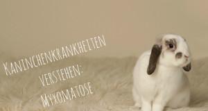 myxomatose kaninchen