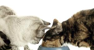 katzenfutter-test
