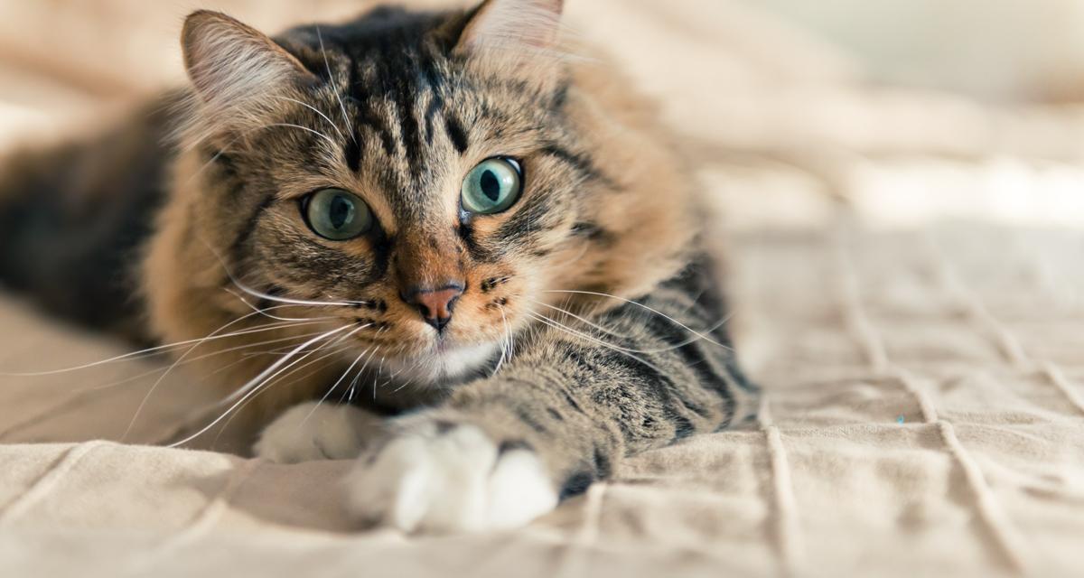 episodisches ged chtnis katzen erinnern sich wie menschen. Black Bedroom Furniture Sets. Home Design Ideas