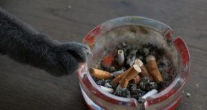 passivrauchen katzen