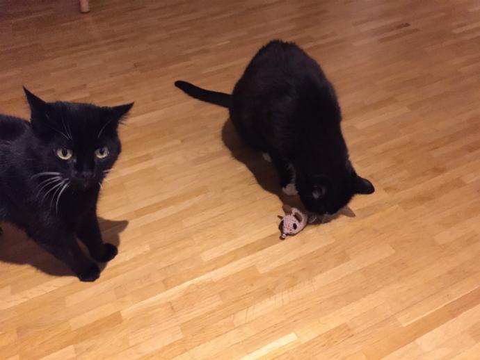 Häkeln Für Katzen Spielmaus Selber Machen Revvetde