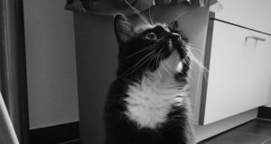 toujeo für katzen