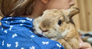 kind und kaninchen