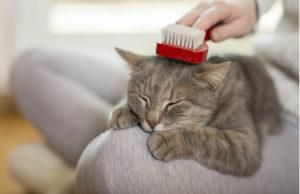 fellpflege katzen