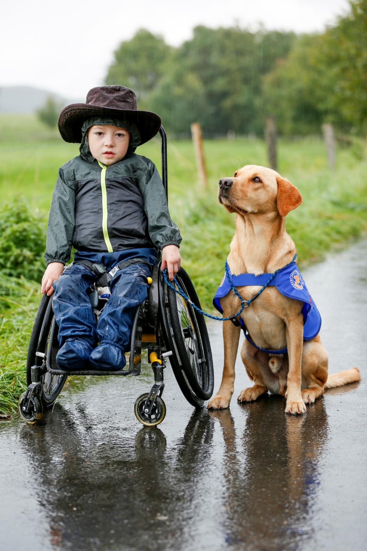 vita-assistenzhund