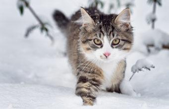 freigänger im winter