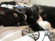 leben mit katzendiabetes