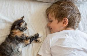 gemeinsamkeiten kinder und katzen
