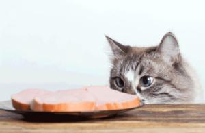 gefaehrliche-nahrungsmittel-fuer-katzen