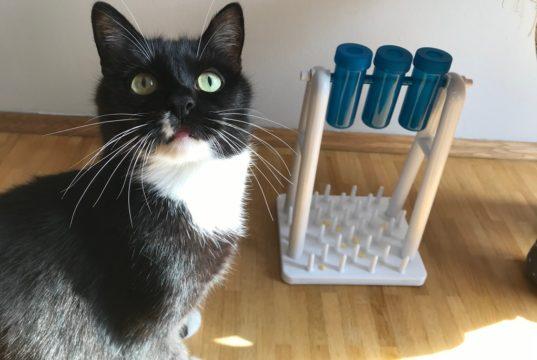 spielen mit katzensenioren 1